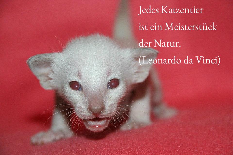 Schöne Katzenzitate mit Bildern zum Versenden (Teil 4)