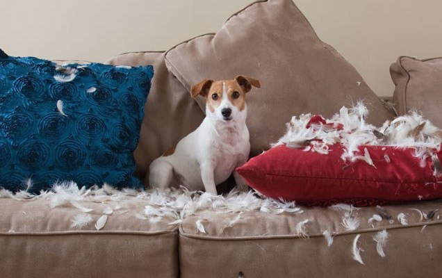 dog destroys pillows
