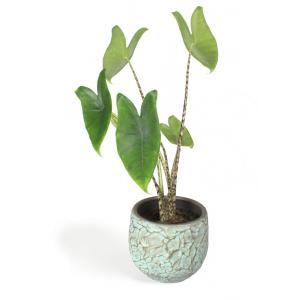 All in 1 kamerplant Alocasia zebrina XS in antiq bronze bloempot