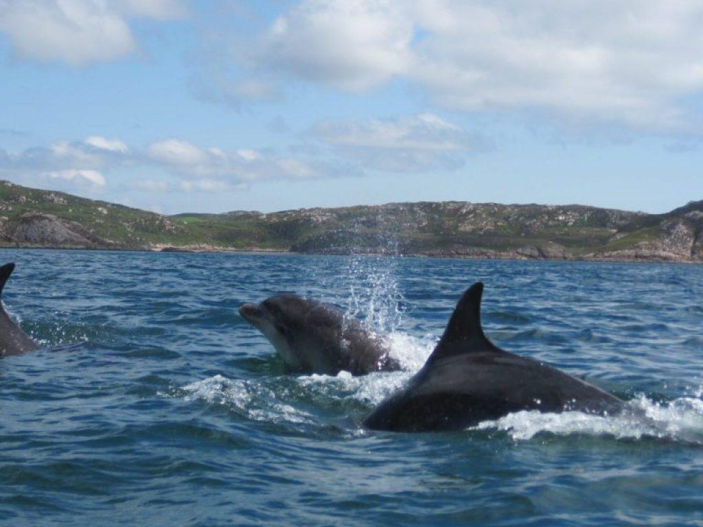 Splashing dolphins