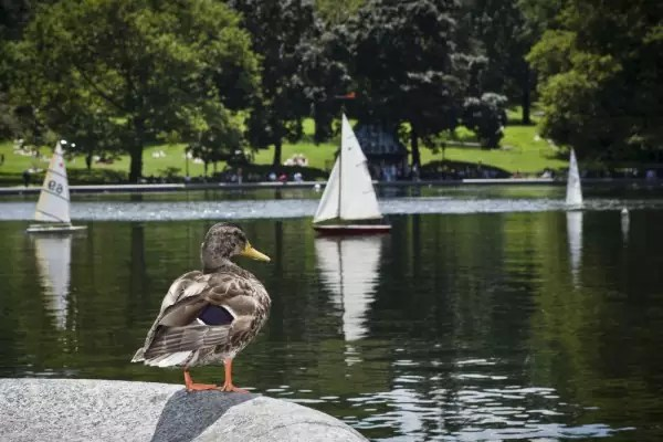 10 things you should do at the central park model boat sailing_alley_girl_guide