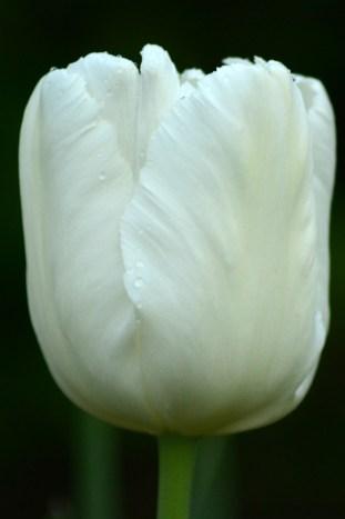 White Parrot ??? 2013