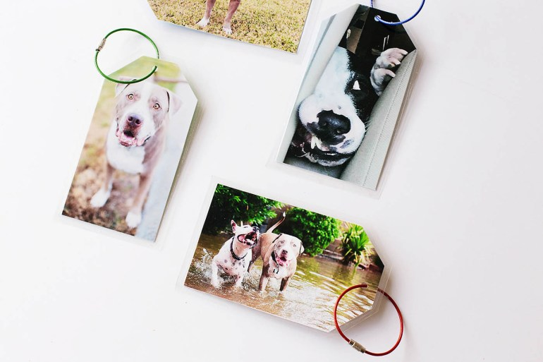 DIY dog photo luggage tags - such a fun way to find your luggage easily when traveling