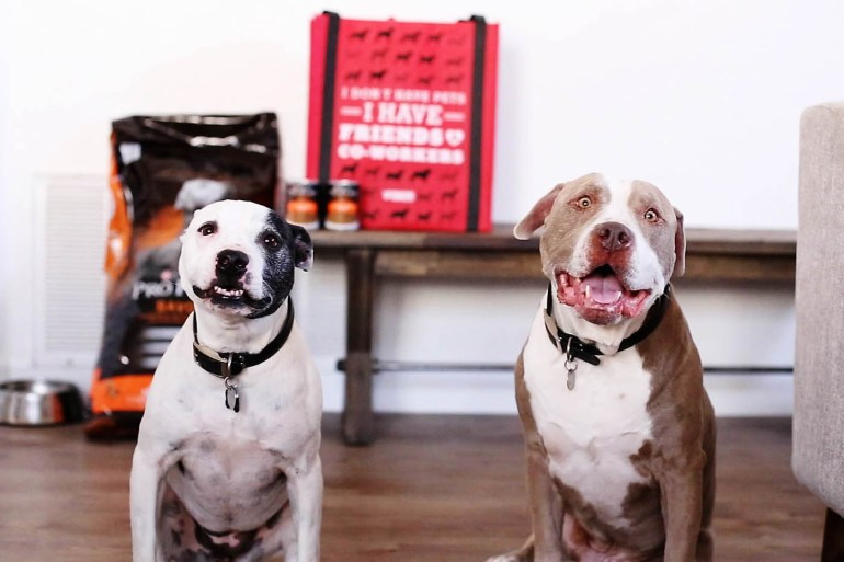 How to keep your dogs safe and happy during home renovations