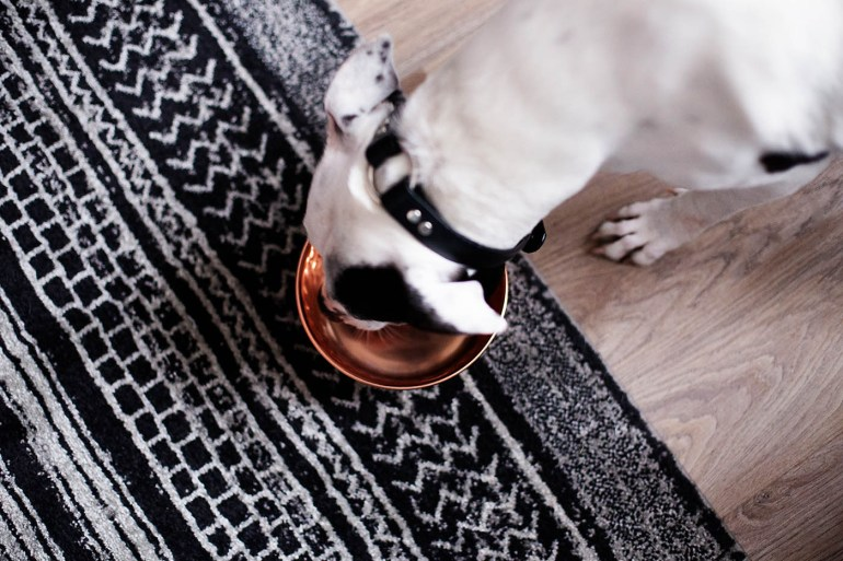 10 ways we make our dogs happy plus how she did on the Purina ONE® 28-Day Challenge