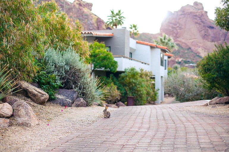 Why You Should Stay at Sanctuary Resort on Camelback Mountain