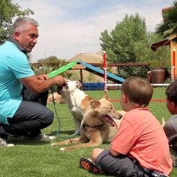 cesped artificial cesar millan