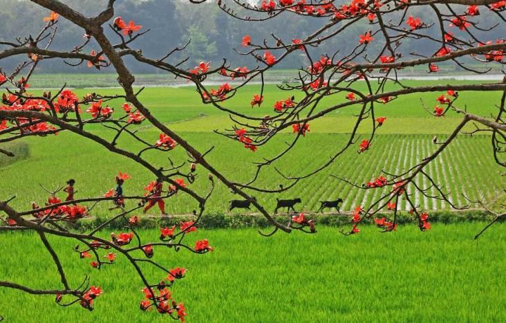 spring in bangladesh