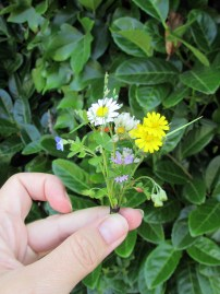 world's tiniest wildflower bouquet