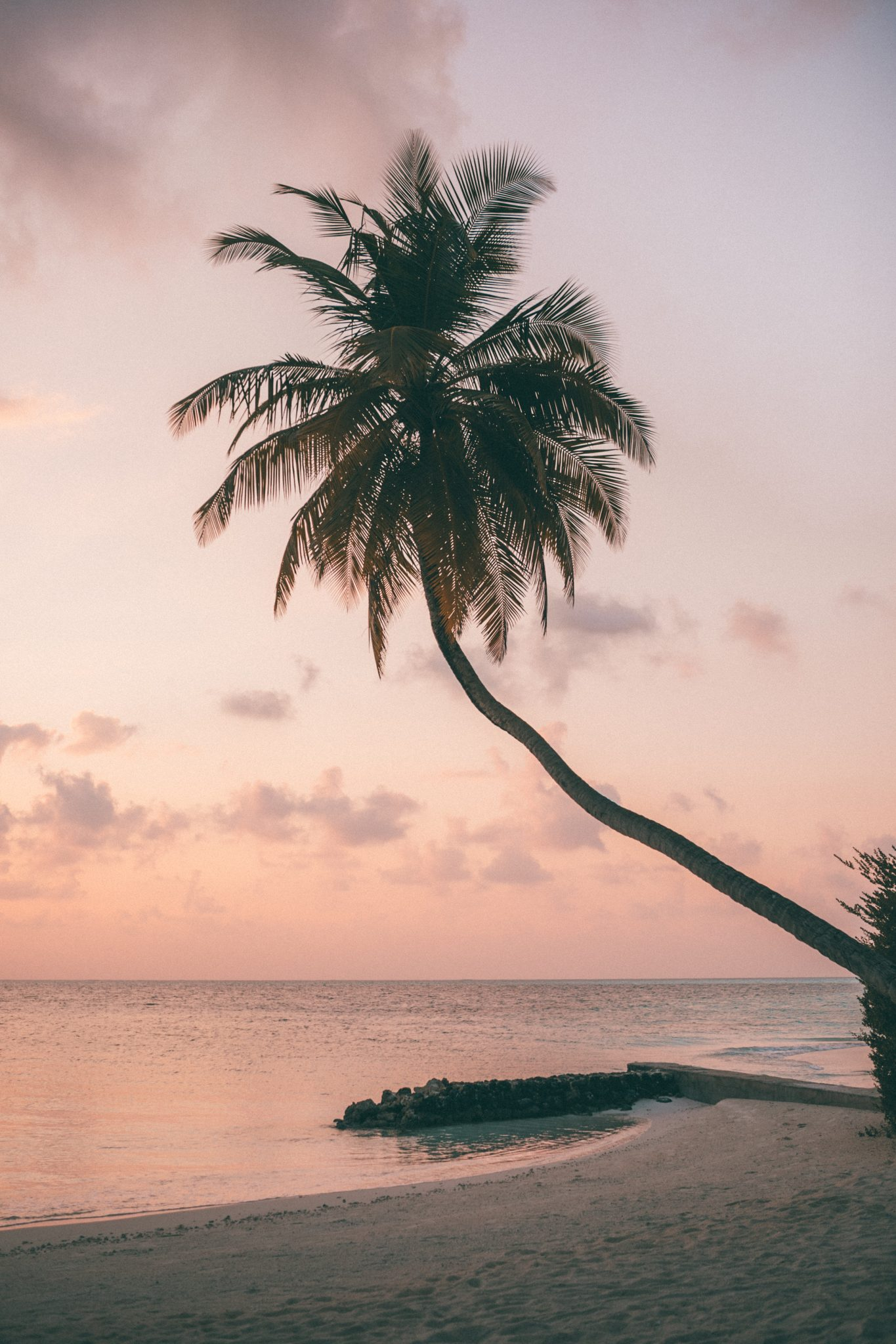 Palm tree with a pastel sunset in the maldives