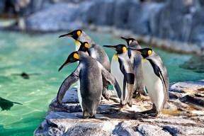flickr_-_shinrya_-_tokyo_zoo_-_penguins