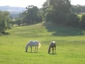 Merlin and Kizzy - Long Meadow, Caplor