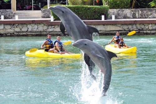 Dreams Puerto Aventuras dolphinarium
