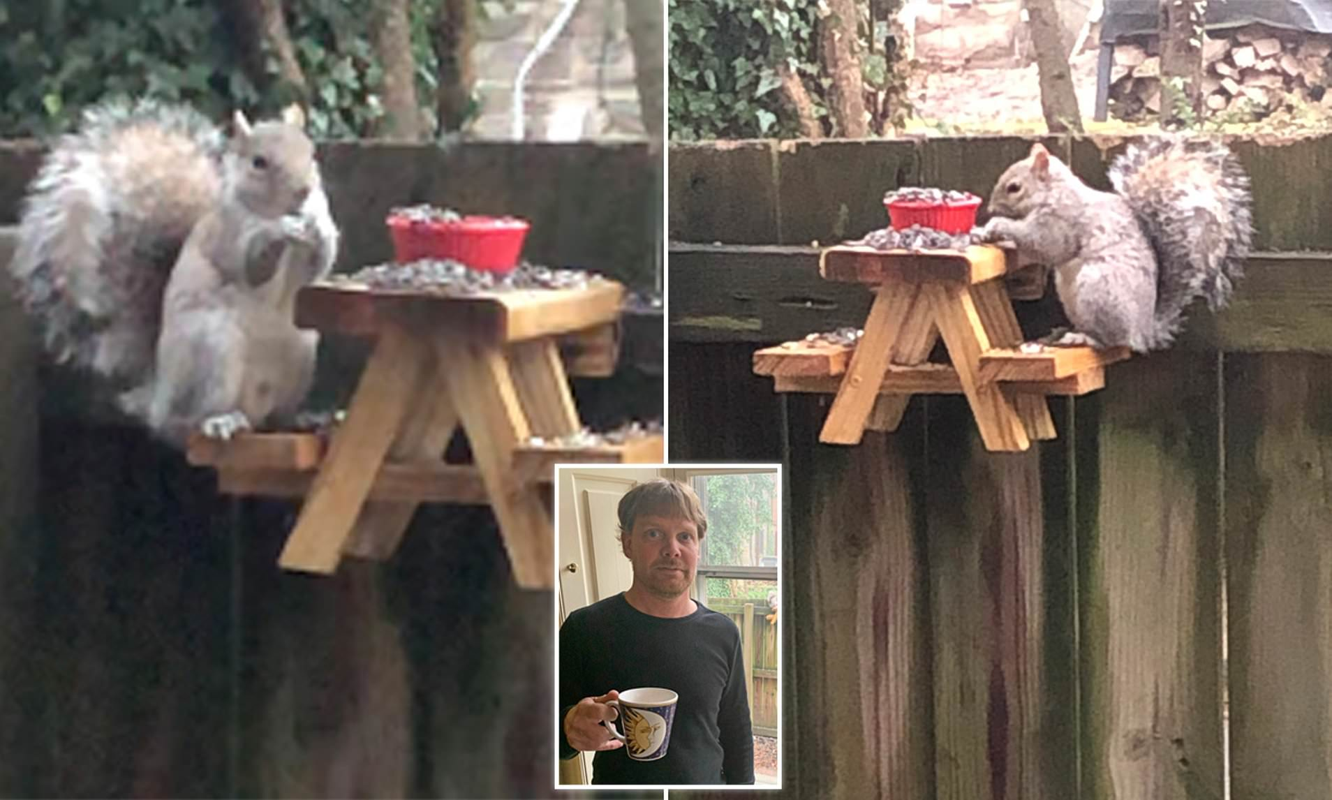 Man Makes Adorable Tiny Picnic Table For Squirrels Living