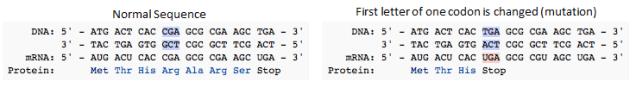 DNAmutations.png