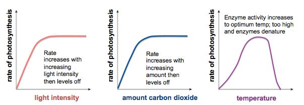 photosynthesisFactorsPS