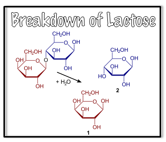 proteinslactose