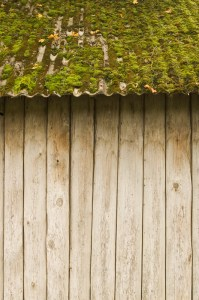 Close-up of a moss covered tin roof