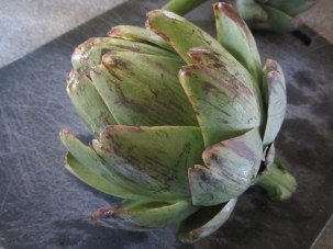 Whole artichoke, ready to have all its leaves pulled off.
