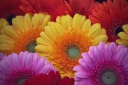 France - Flower Market
