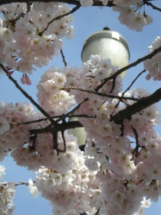 cherry blossoms lamp