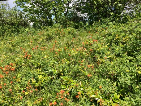 Orange wildflowers scatter about.