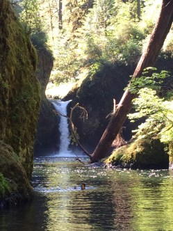 Punch Bowl Falls (Columbia River Gorge)
