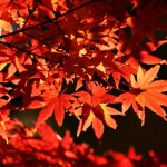 Traditions of trees and seasons