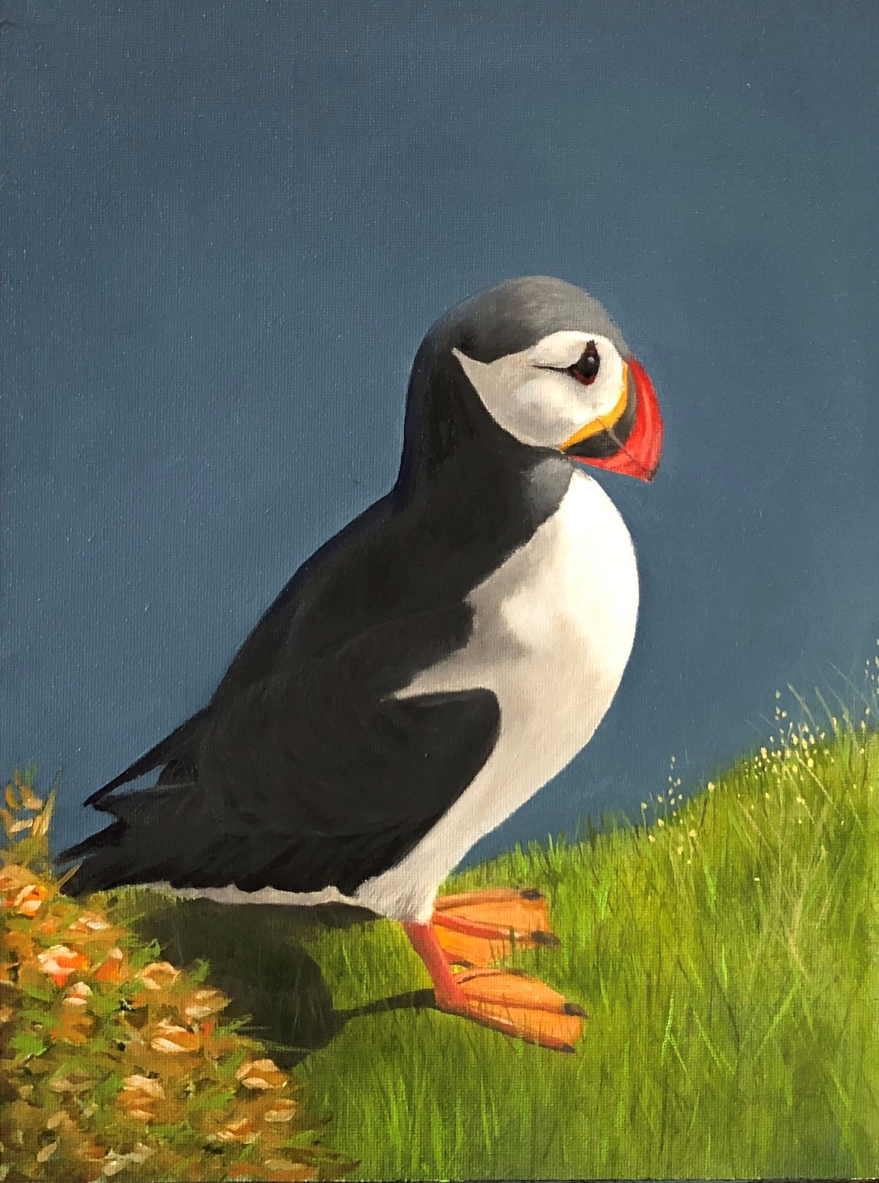puffin on grass