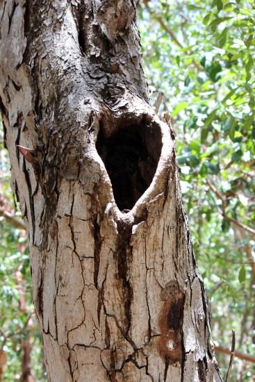 Forest walk. Heart tree. Pennekamp Park.