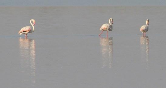 Flamingo 4