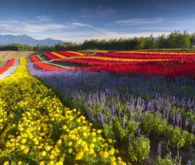 Best Of Honshu Hokkaido Summer Flowers