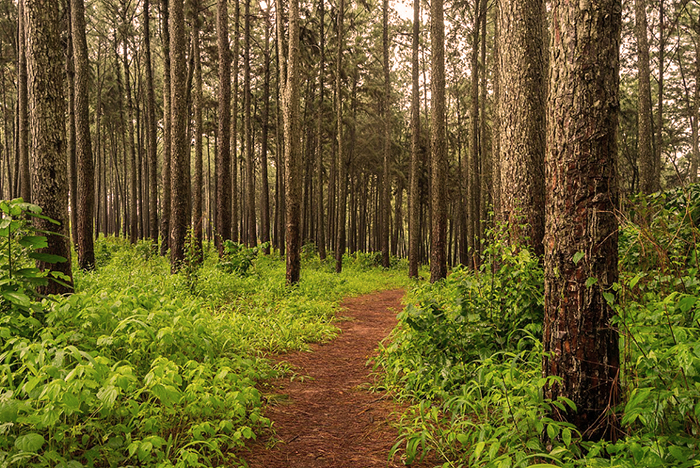 Enugu governor declares immediate demolition of caves in Agwu forests