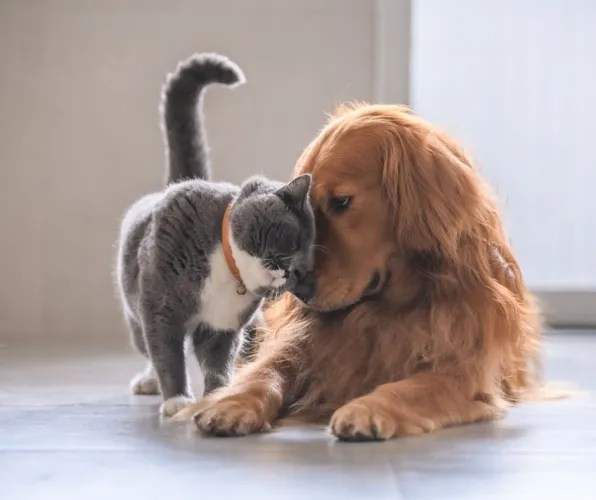 Our Fur Babies and the Four Pillars of Wellness