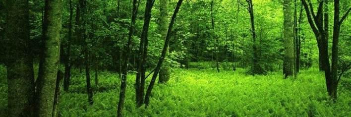 قوة الشفاء بالعودة إلى الطبيعة