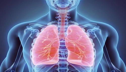 الفطر الريشي ينظم وظيفة الجهاز التنفسي