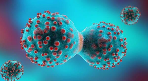 طريقة تكاثر الخلايا السرطانية