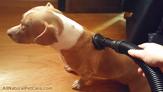 B-Air Fido Max 1 Dog Dryer Review