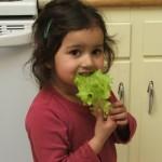amie-lettuce-150x150