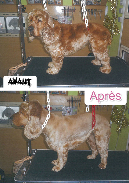 toilettage chien chat redon canin félin soins