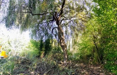 élagueur grimpeur arbre la bohalle