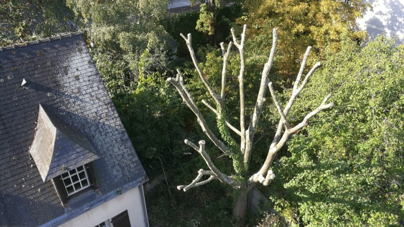 abattage arbre jardin privatif