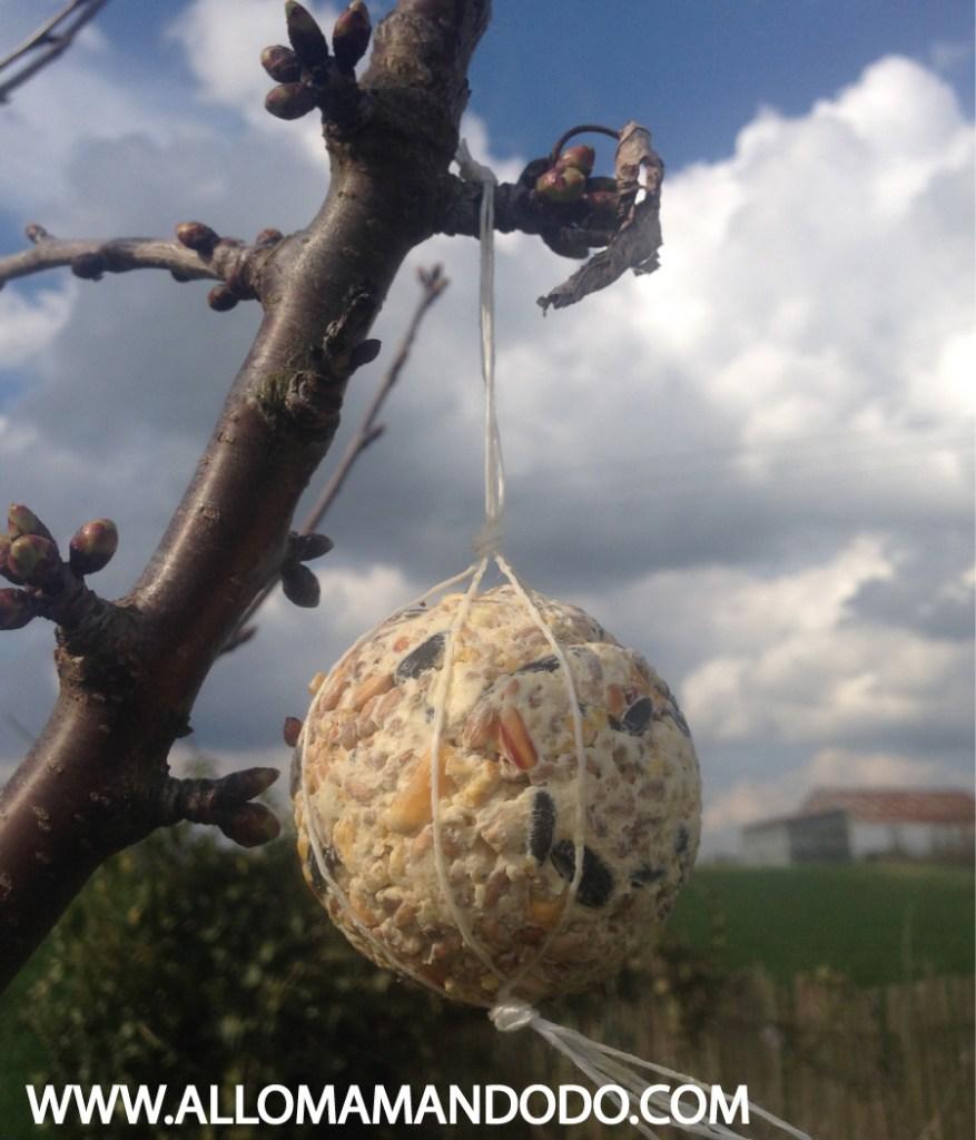 activité enfant oiseau graines