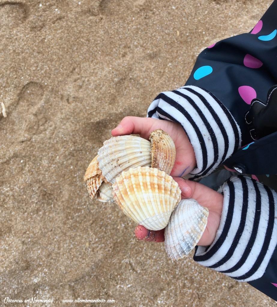 normandie coquillages plage
