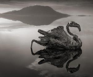 Stone Lake Flamingo by Nick Brandt