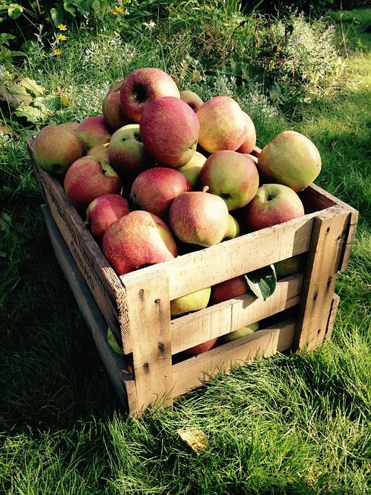 caisse de pommes 5kg