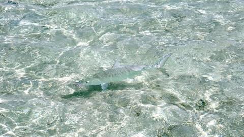 RS Camouflaged Bonefish Toau Tuamotus Eastern anchorage