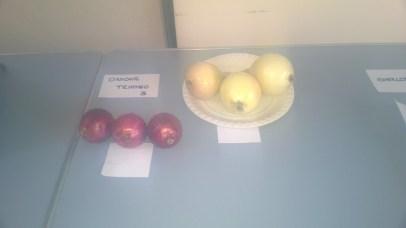 onion-table-1