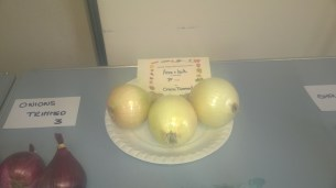 prizewinning-onions