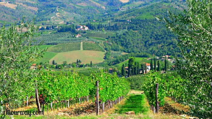 Panzano Italy green countryside with rows of fruit and vegetables going up and down the hills.